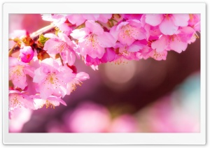 Enter Spring HD Wide Wallpaper for Widescreen