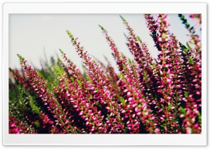 Erica Ultra HD Wallpaper for 4K UHD Widescreen desktop, tablet & smartphone