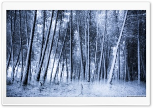 Eternal Winter HD Wide Wallpaper for Widescreen
