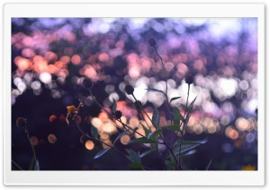 Evening Bokeh And Flowers HD Wide Wallpaper for Widescreen