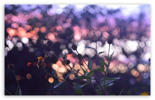 Evening Bokeh And Flowers HD wallpaper for Wide 16:10 5:3 Widescreen WHXGA WQXGA WUXGA WXGA WGA ; HD 16:9 High Definition WQHD QWXGA 1080p 900p 720p QHD nHD ; Standard 4:3 5:4 3:2 Fullscreen UXGA XGA SVGA QSXGA SXGA DVGA HVGA HQVGA devices ( Apple PowerBook G4 iPhone 4 3G 3GS iPod Touch ) ; Tablet 1:1 ; iPad 1/2/Mini ; Mobile 4:3 5:3 3:2 16:9 5:4 - UXGA XGA SVGA WGA DVGA HVGA HQVGA devices ( Apple PowerBook G4 iPhone 4 3G 3GS iPod Touch ) WQHD QWXGA 1080p 900p 720p QHD nHD QSXGA SXGA ; Dual 16:10 5:3 16:9 4:3 5:4 WHXGA WQXGA WUXGA WXGA WGA WQHD QWXGA 1080p 900p 720p QHD nHD UXGA XGA SVGA QSXGA SXGA ;