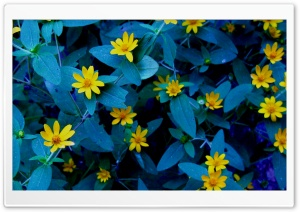 Evening Flowers HD Wide Wallpaper for Widescreen