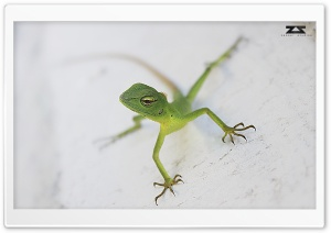 Everybody in Life is a Chameleon HD Wide Wallpaper for Widescreen