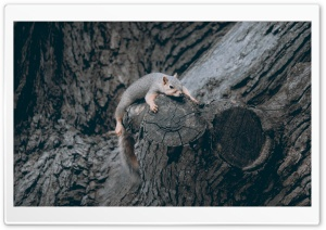 Exhausted Squirrel HD Wide Wallpaper for Widescreen