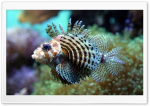 Exotic Fish 12 HD Wide Wallpaper for Widescreen