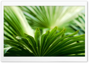 Exotic Leaf Ultra HD Wallpaper for 4K UHD Widescreen desktop, tablet & smartphone