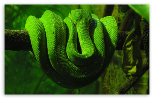 Exotic Snake HD wallpaper for Wide 16:10 5:3 Widescreen WHXGA WQXGA WUXGA WXGA WGA ; HD 16:9 High Definition WQHD QWXGA 1080p 900p 720p QHD nHD ; Standard 4:3 5:4 3:2 Fullscreen UXGA XGA SVGA QSXGA SXGA DVGA HVGA HQVGA devices ( Apple PowerBook G4 iPhone 4 3G 3GS iPod Touch ) ; iPad 1/2/Mini ; Mobile 4:3 5:3 3:2 16:9 5:4 - UXGA XGA SVGA WGA DVGA HVGA HQVGA devices ( Apple PowerBook G4 iPhone 4 3G 3GS iPod Touch ) WQHD QWXGA 1080p 900p 720p QHD nHD QSXGA SXGA ;