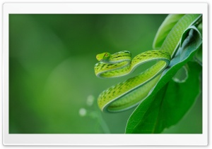 Exotic Snake HD Wide Wallpaper for Widescreen