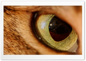 Eye Of The Tiger HD Wide Wallpaper for Widescreen