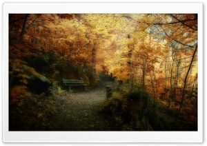 Fall HD Wide Wallpaper for Widescreen