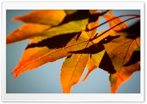 Fall Color HD Wide Wallpaper for Widescreen