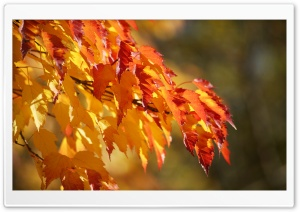 Fall Colors HD Wide Wallpaper for Widescreen