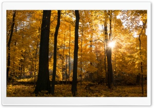Fall Colors Sunrise, Forest HD Wide Wallpaper for Widescreen