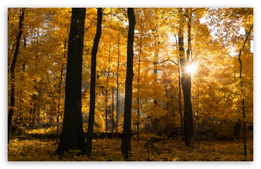 Fall Colors Sunrise, Forest HD wallpaper for Wide 16:10 5:3 Widescreen WHXGA WQXGA WUXGA WXGA WGA ; HD 16:9 High Definition WQHD QWXGA 1080p 900p 720p QHD nHD ; UHD 16:9 WQHD QWXGA 1080p 900p 720p QHD nHD ; Standard 4:3 5:4 3:2 Fullscreen UXGA XGA SVGA QSXGA SXGA DVGA HVGA HQVGA devices ( Apple PowerBook G4 iPhone 4 3G 3GS iPod Touch ) ; Tablet 1:1 ; iPad 1/2/Mini ; Mobile 4:3 5:3 3:2 16:9 5:4 - UXGA XGA SVGA WGA DVGA HVGA HQVGA devices ( Apple PowerBook G4 iPhone 4 3G 3GS iPod Touch ) WQHD QWXGA 1080p 900p 720p QHD nHD QSXGA SXGA ; Dual 16:10 5:3 16:9 4:3 5:4 WHXGA WQXGA WUXGA WXGA WGA WQHD QWXGA 1080p 900p 720p QHD nHD UXGA XGA SVGA QSXGA SXGA ;