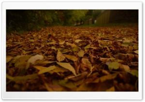 Fall Colours HD Wide Wallpaper for Widescreen