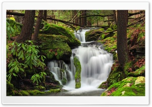 Fall Creek, Forest HD Wide Wallpaper for Widescreen