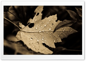 Fall Drops HD Wide Wallpaper for Widescreen