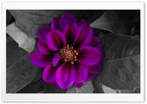 Fall Flower HD Wide Wallpaper for 4K UHD Widescreen desktop & smartphone