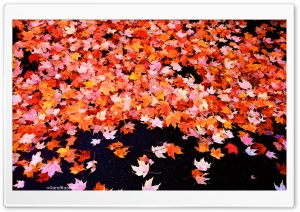 Fall Foliage HD Wide Wallpaper for Widescreen