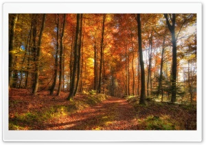 Fall Forest Path HD Wide Wallpaper for Widescreen