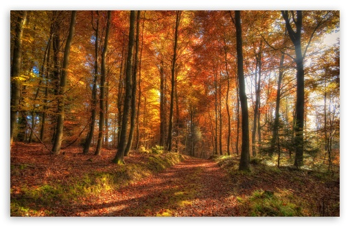 Fall Forest Path ❤ 4K UHD Wallpaper for Wide 16:10 5:3 Widescreen WHXGA WQXGA WUXGA WXGA WGA ; 4K UHD 16:9 Ultra High Definition 2160p 1440p 1080p 900p 720p ; Standard 4:3 5:4 3:2 Fullscreen UXGA XGA SVGA QSXGA SXGA DVGA HVGA HQVGA ( Apple PowerBook G4 iPhone 4 3G 3GS iPod Touch ) ; Tablet 1:1 ; iPad 1/2/Mini ; Mobile 4:3 5:3 3:2 16:9 5:4 - UXGA XGA SVGA WGA DVGA HVGA HQVGA ( Apple PowerBook G4 iPhone 4 3G 3GS iPod Touch ) 2160p 1440p 1080p 900p 720p QSXGA SXGA ; Dual 5:4 QSXGA SXGA ;