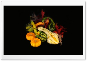 Fall Gourds HD Wide Wallpaper for Widescreen