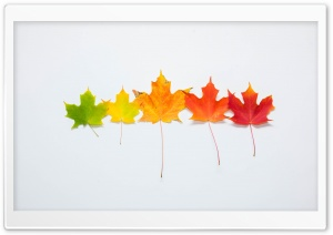 Fall Gradient HD Wide Wallpaper for Widescreen