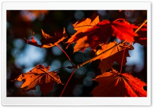Fall Impression HD Wide Wallpaper for Widescreen