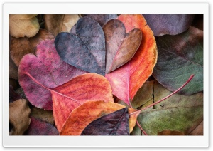 Fall In Love HD Wide Wallpaper for Widescreen