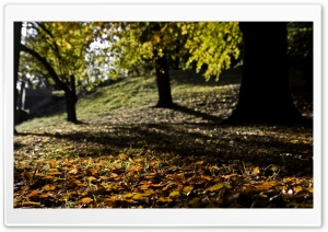 Fall Is All Around HD Wide Wallpaper for Widescreen