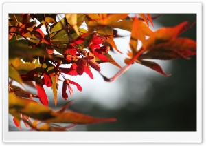 Fall Is Coming HD Wide Wallpaper for 4K UHD Widescreen desktop & smartphone