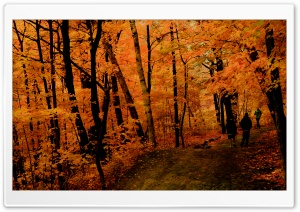 Fall Jogging HD Wide Wallpaper for Widescreen