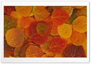 Fall Leaves HD Wide Wallpaper for 4K UHD Widescreen desktop & smartphone