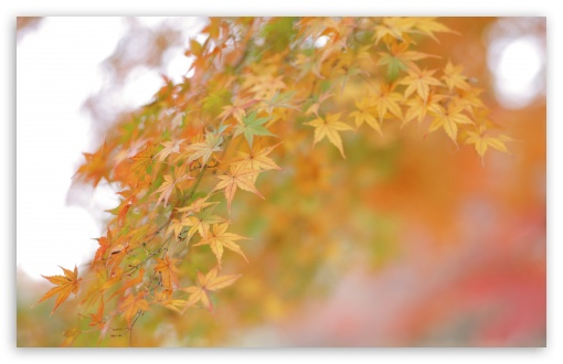 Fall Leaves HD wallpaper for Standard 4:3 5:4 Fullscreen UXGA XGA SVGA QSXGA SXGA ; Wide 16:10 5:3 Widescreen WHXGA WQXGA WUXGA WXGA WGA ; HD 16:9 High Definition WQHD QWXGA 1080p 900p 720p QHD nHD ; Other 3:2 DVGA HVGA HQVGA devices ( Apple PowerBook G4 iPhone 4 3G 3GS iPod Touch ) ; Mobile VGA WVGA iPhone iPad PSP Phone - VGA QVGA Smartphone ( PocketPC GPS iPod Zune BlackBerry HTC Samsung LG Nokia Eten Asus ) WVGA WQVGA Smartphone ( HTC Samsung Sony Ericsson LG Vertu MIO ) HVGA Smartphone ( Apple iPhone iPod BlackBerry HTC Samsung Nokia ) Sony PSP Zune HD Zen ; Tablet 2 Android ; Dual 4:3 5:4 16:10 5:3 16:9 UXGA XGA SVGA QSXGA SXGA WHXGA WQXGA WUXGA WXGA WGA WQHD QWXGA 1080p 900p 720p QHD nHD ;