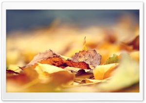 Fall Leaves HD Wide Wallpaper for Widescreen