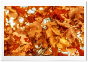 Fall Leaves Ultra HD Wallpaper for 4K UHD Widescreen desktop, tablet & smartphone