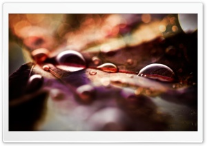 Fall Leaves And Raindrops HD Wide Wallpaper for Widescreen