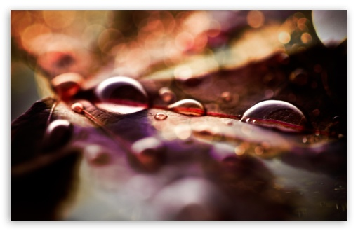 Fall Leaves And Raindrops HD wallpaper for Wide 16:10 5:3 Widescreen WHXGA WQXGA WUXGA WXGA WGA ; HD 16:9 High Definition WQHD QWXGA 1080p 900p 720p QHD nHD ; Standard 4:3 3:2 Fullscreen UXGA XGA SVGA DVGA HVGA HQVGA devices ( Apple PowerBook G4 iPhone 4 3G 3GS iPod Touch ) ; iPad 1/2/Mini ; Mobile 4:3 5:3 3:2 - UXGA XGA SVGA WGA DVGA HVGA HQVGA devices ( Apple PowerBook G4 iPhone 4 3G 3GS iPod Touch ) ;