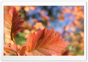 Fall Leaves Bokeh HD Wide Wallpaper for Widescreen