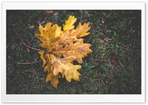 Fall Oak Leaves HD Wide Wallpaper for Widescreen