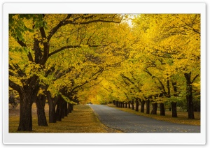 Fall Of The Year HD Wide Wallpaper for Widescreen