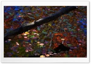 Fall On The Lake Ultra HD Wallpaper for 4K UHD Widescreen desktop, tablet & smartphone