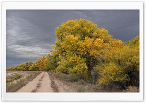 Fall, Overcast, Yellow Trees, Road, Nature Ultra HD Wallpaper for 4K UHD Widescreen desktop, tablet & smartphone