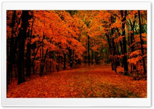 Fall Path HD Wide Wallpaper for Widescreen