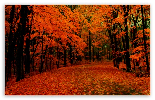 Fall Path HD wallpaper for Wide 16:10 5:3 Widescreen WHXGA WQXGA WUXGA WXGA WGA ; HD 16:9 High Definition WQHD QWXGA 1080p 900p 720p QHD nHD ; Standard 4:3 5:4 3:2 Fullscreen UXGA XGA SVGA QSXGA SXGA DVGA HVGA HQVGA devices ( Apple PowerBook G4 iPhone 4 3G 3GS iPod Touch ) ; Tablet 1:1 ; iPad 1/2/Mini ; Mobile 4:3 5:3 3:2 16:9 5:4 - UXGA XGA SVGA WGA DVGA HVGA HQVGA devices ( Apple PowerBook G4 iPhone 4 3G 3GS iPod Touch ) WQHD QWXGA 1080p 900p 720p QHD nHD QSXGA SXGA ; Dual 16:10 5:3 16:9 4:3 5:4 WHXGA WQXGA WUXGA WXGA WGA WQHD QWXGA 1080p 900p 720p QHD nHD UXGA XGA SVGA QSXGA SXGA ;