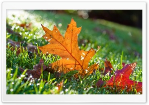 Fall Points HD Wide Wallpaper for 4K UHD Widescreen desktop & smartphone