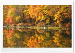 Fall Reflection HD Wide Wallpaper for Widescreen