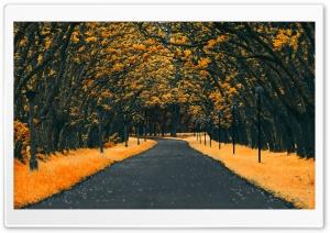 Fall, Road, Nature Ultra HD Wallpaper for 4K UHD Widescreen desktop, tablet & smartphone