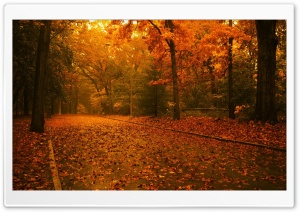 Fall Scene HD Wide Wallpaper for Widescreen