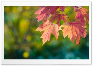 Fall, Sun, Leaves And Bokeh HD Wide Wallpaper for Widescreen